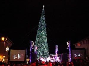 120415-cc-christmas-trees-tallest
