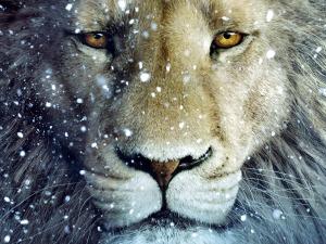 cum-sa-transformi-frica-in-curaj